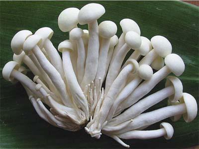 菌long8国际网页版